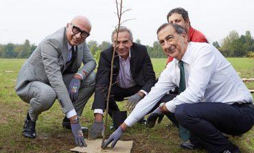 Superata quota 500mila alberi in città